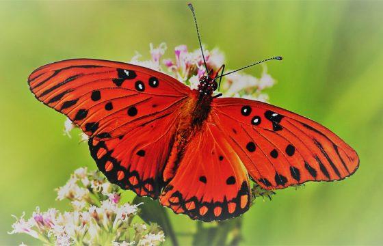 An enchanted beauty